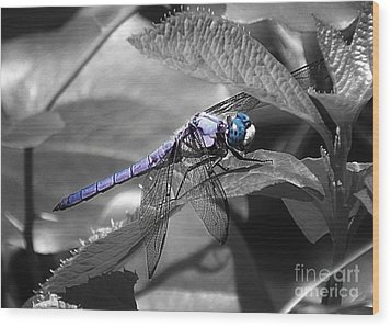 Blue Eyed Dragonfly Wood Print