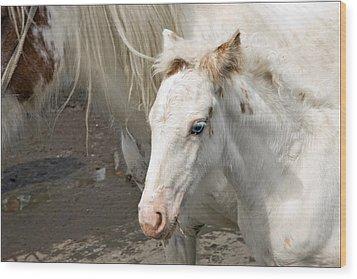 Blue Eyed Foal Wood Print by Liz  Alderdice