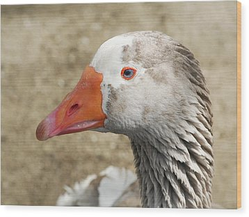 Blue-eyed Goose Wood Print by Bob and Jan Shriner