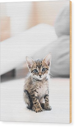 Blue Eyed Kitten Wood Print by Shelby  Young