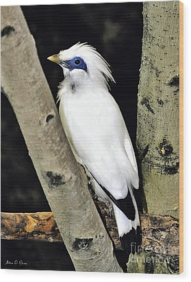 Wood Print featuring the photograph Blue Eyes by Adam Olsen