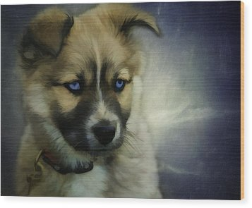 Blue Eyes Wood Print by Jacque The Muse Photography