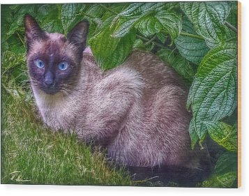 Wood Print featuring the photograph Blue Eyes - Signed by Hanny Heim