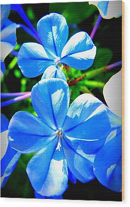 Wood Print featuring the photograph Blue Flower by David Mckinney