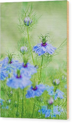 Blue Flowers Wood Print by Diana Kraleva