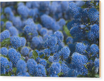 Blue Flowers Wood Print by Svetlana Sewell