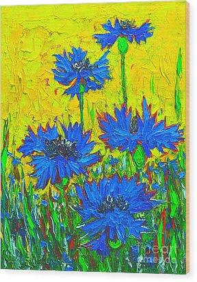 Blue Flowers - Wild Cornflowers In Sunlight  Wood Print by Ana Maria Edulescu