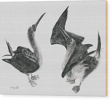 Blue-footed Boobies Wood Print by Lucy D