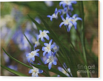 Blue For You Wood Print by Neal Eslinger