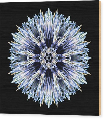 Blue Globe Thistle Flower Mandala Wood Print