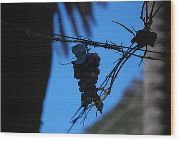 Blue Grapes Wood Print by Dany Lison