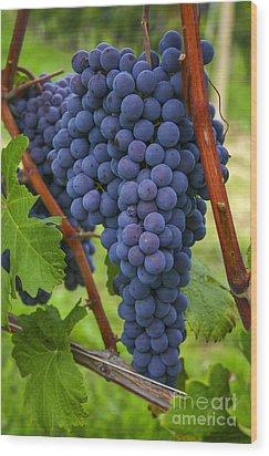 Blue Grapes Wood Print by Patricia Hofmeester