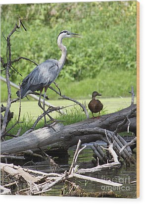 Wood Print featuring the photograph Blue Heron And Friend by Debbie Hart