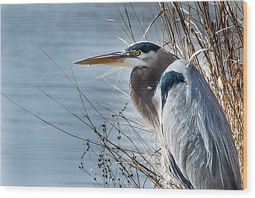 Blue Heron At Pond Wood Print