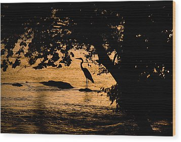 Blue Heron At Sunset Wood Print