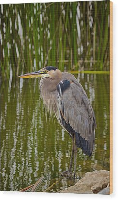 Blue Heron Wood Print by Duncan Selby