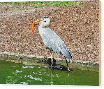 Wood Print featuring the photograph Blue Heron Feeding by Joe  Ng