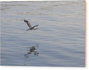 Blue Heron In Flight Wood Print