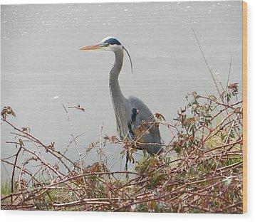 Wood Print featuring the photograph Blue Heron In Padilla Bay by Karen Molenaar Terrell