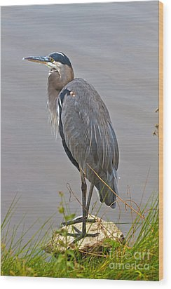 Blue Heron Iv Wood Print