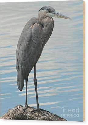 Wood Print featuring the photograph Blue Heron  by Kenny Glotfelty