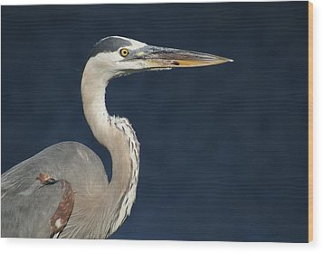 Blue Heron Wood Print by Lois Lepisto