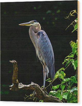 Blue Heron Majestic Pose Wood Print