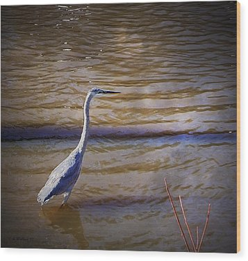 Blue Heron - Shallow Water Wood Print by Brian Wallace