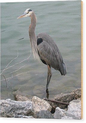 Blue Heron Wood Print by Wendy Coulson