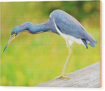Blue Heron Wood Print by William Wyckoff