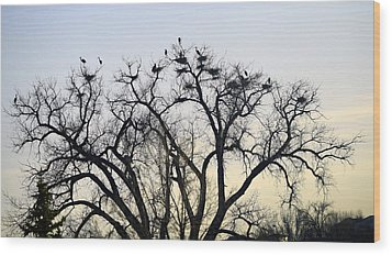 Blue Herons Wood Print