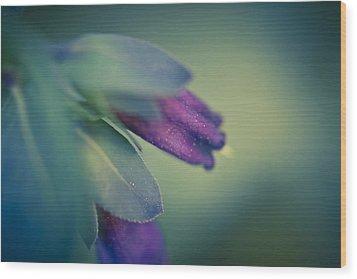 Blue Honeywort Wood Print by Priya Ghose