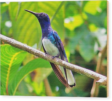 Wood Print featuring the photograph Blue Humming Bird by Al Fritz