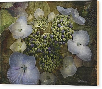 Wood Print featuring the photograph Blue Hydrangea by Barbara Orenya