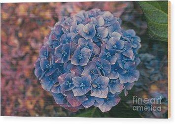 Blue Hydrangea Wood Print by Heather Kirk