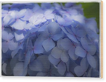 Wood Print featuring the photograph Blue Hydrangea One by Craig Perry-Ollila