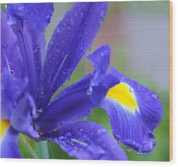 Wood Print featuring the photograph Blue Iris by Haleh Mahbod