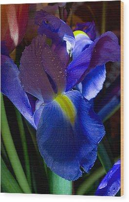 Blue Iris Wood Print by Joann Vitali