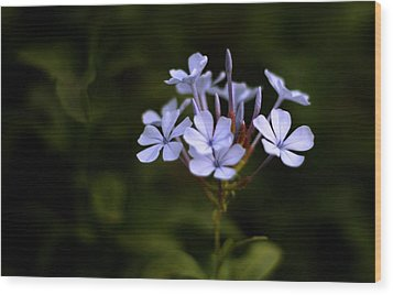 Wood Print featuring the photograph Blue Jasmine by Ramabhadran Thirupattur