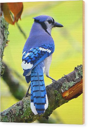 Wood Print featuring the photograph Blue Jay by Deena Stoddard