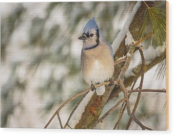 Blue Jay Wood Print by Everet Regal