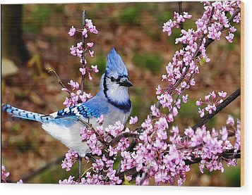 Blue Jay In The Pink Wood Print