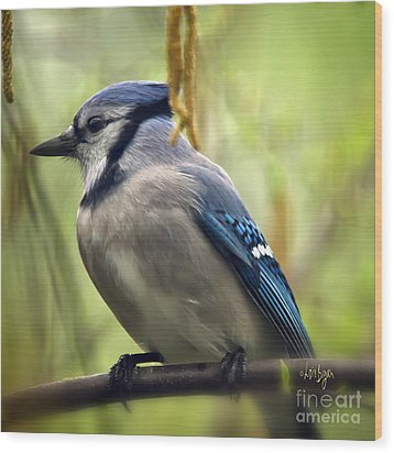 Blue Jay On A Misty Spring Day - Square Format Wood Print by Lois Bryan