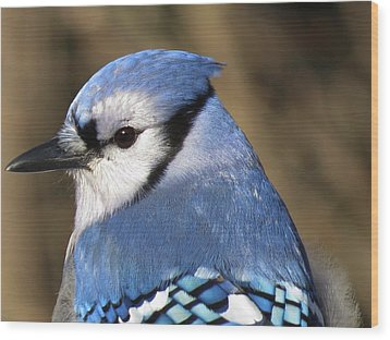 Blue Jay Profile Wood Print by MTBobbins Photography