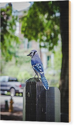 Wood Print featuring the photograph Blue Jay by Sennie Pierson