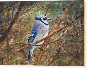 Wood Print featuring the photograph Blue Jay by Trina  Ansel