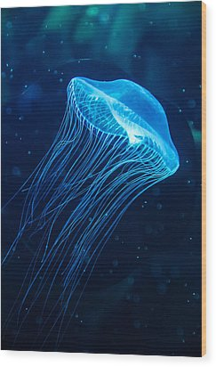 Blue Jelly Wood Print