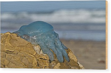 Blue Jellyfish 02 Wood Print