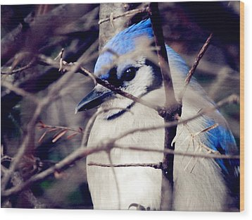 Wood Print featuring the photograph Blue Joy by Zinvolle Art