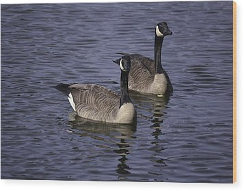 Blue Lake Geese Wood Print